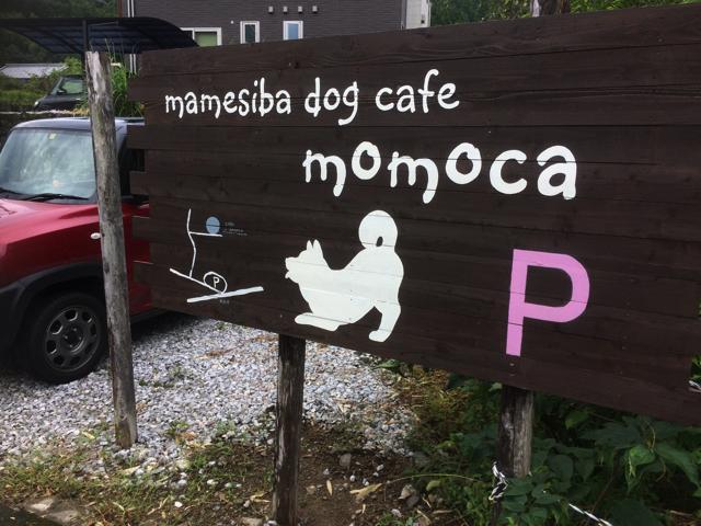 豆柴ドッグカフェmomoca5